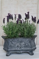 Jardiniere-gietijzer-*Verkocht*