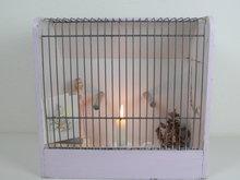 Vogelkooitje-*Verkocht*